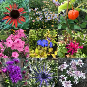 Alle soorten Vaste Planten - A t/m Z